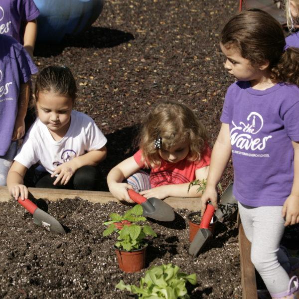Edible Garden Planting Day48
